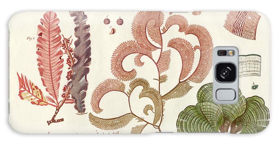 Bertuch Galaxy S8 Case featuring the drawing Seaweed Different Kinds by Splendid Art Prints