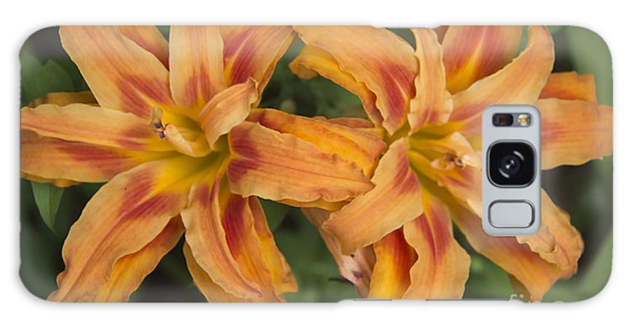 Daylily Galaxy S8 Case featuring the photograph Seeing Double by Teresa Mucha