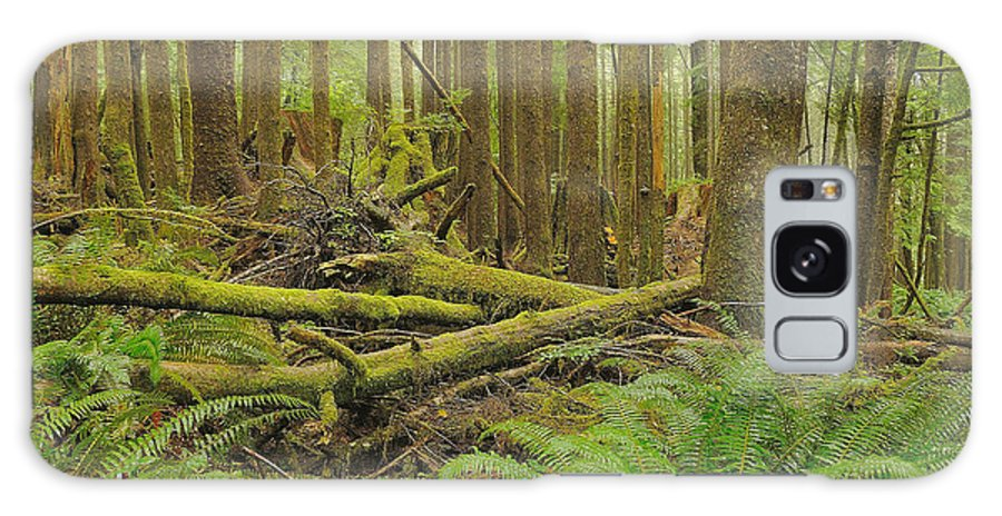 Forest Galaxy S8 Case featuring the photograph Seeing Forest Through The Trees by Jim Southwell