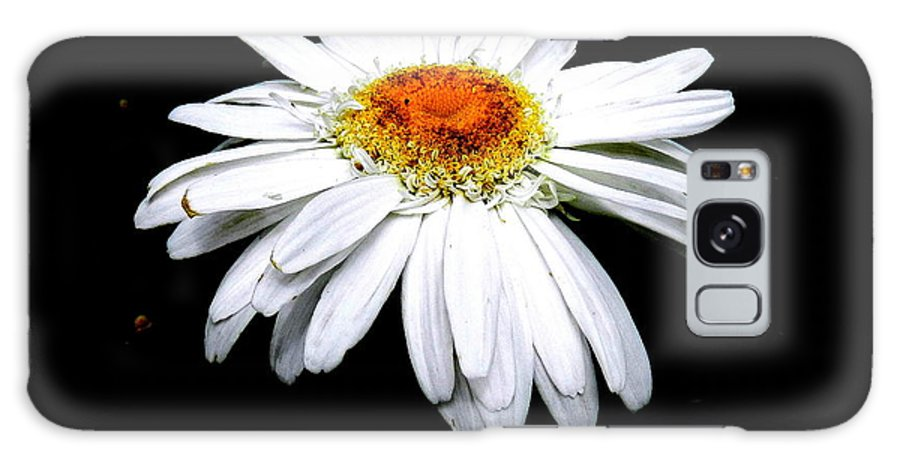 White Daisy Galaxy S8 Case featuring the photograph Serenity by Sheri Copeland