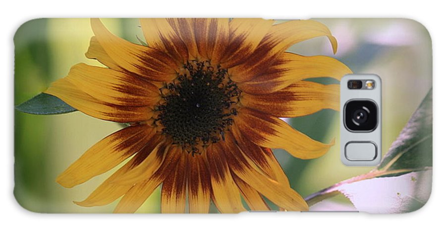 Sunflower Galaxy S8 Case featuring the photograph Shaded From The Sun by Rosanne Jordan