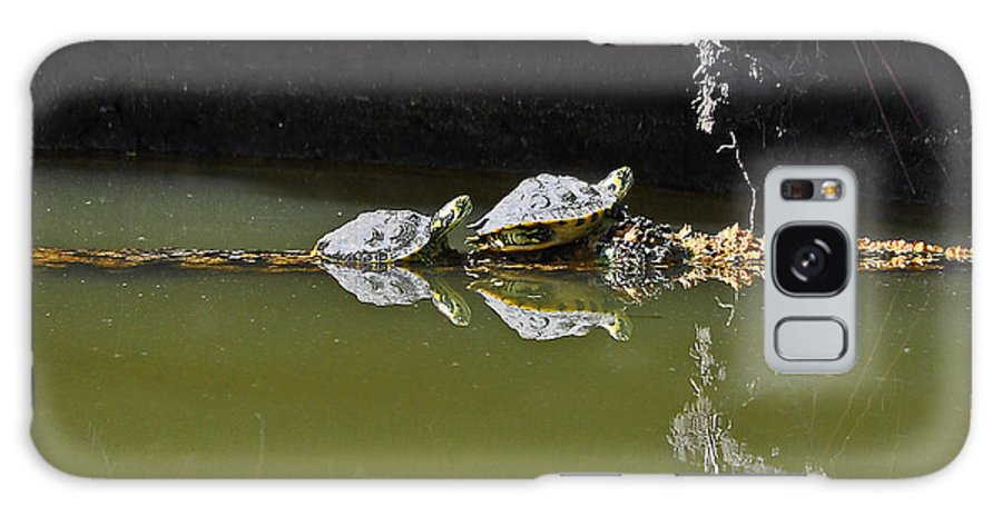 Turtle Galaxy S8 Case featuring the photograph Sharing Sliders by Al Powell Photography USA