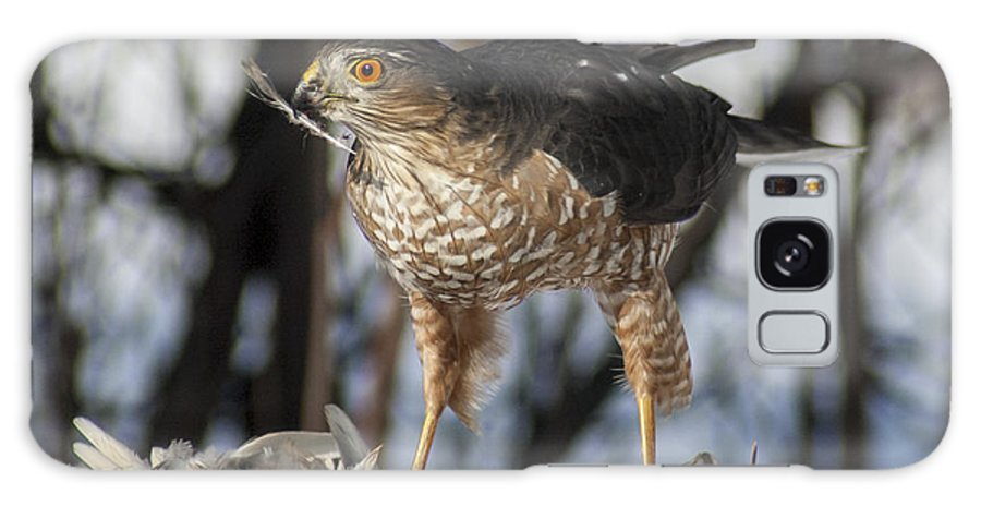 Hawk Galaxy S8 Case featuring the photograph Sharp-shinned Hawk And Feather by Richard Kitchen