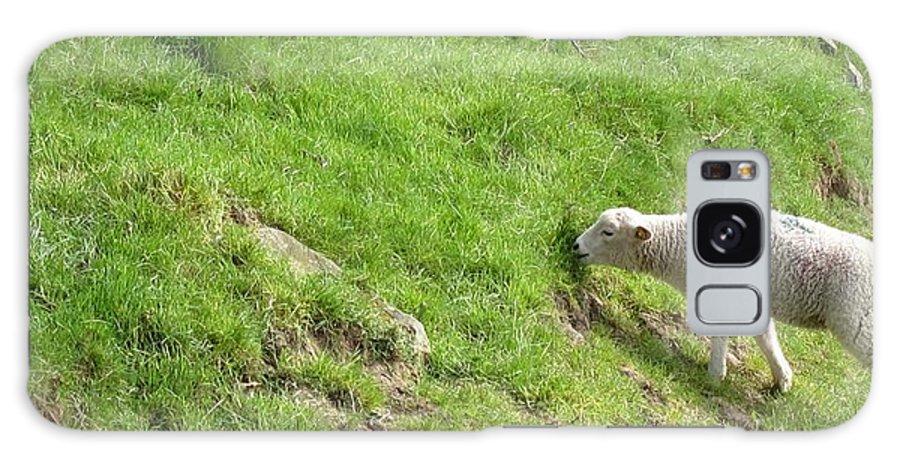 Sheep Galaxy S8 Case featuring the photograph Sheep by David McCadden