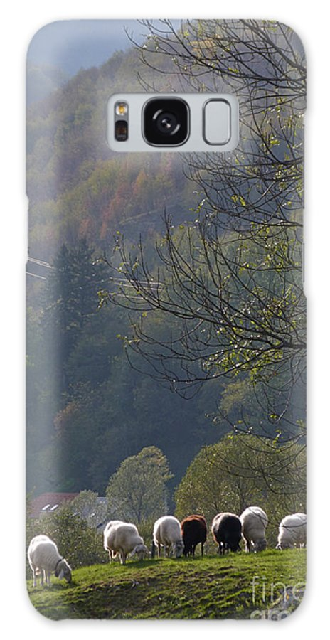 Sheep Galaxy S8 Case featuring the photograph Sheep In A Line by Phil Banks