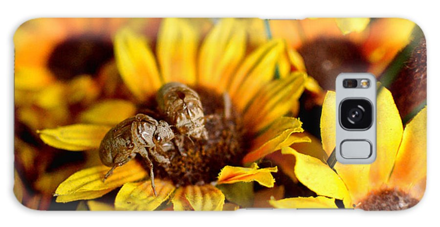 Dry Fly Galaxy S8 Case featuring the pyrography Shell Of A Bug On Flower by Jeffrey Platt