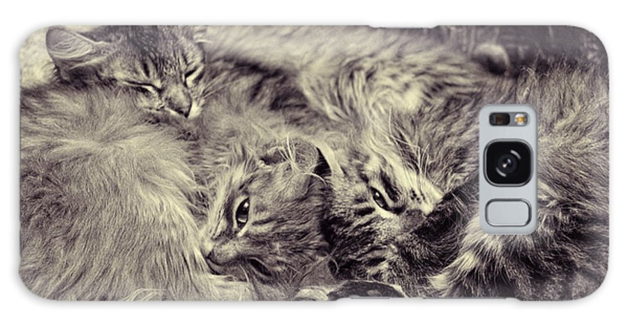 Sleeping Cats Galaxy S8 Case featuring the photograph Sheltered by Studio Yuki