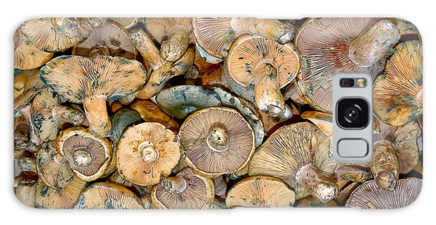 Fruit And Vegetable Market Galaxy S8 Case featuring the photograph Shrooms by Bob Phillips