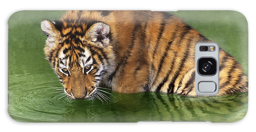Siberian Tiger Galaxy S8 Case featuring the photograph Siberian Tiger Cub In Pond Endangered Species Wildlife Rescue by Dave Welling