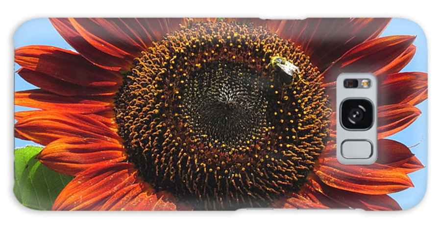 Brown Sunflower Sienna Sunflower Cinnamon Sunflower Summer Flowers Big Flowers Large Flowers Summer Flora Exotic Flowers Rare Flowers Pretty Flowers Colorful Flowers Reddish Brown Flowers Galaxy S8 Case featuring the photograph Sienna Sunflower by Joshua Bales