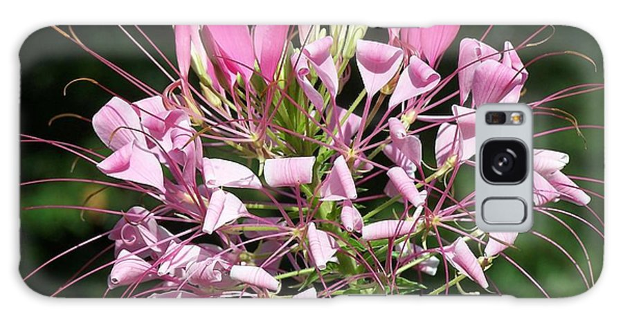 Pink Flowers Galaxy S8 Case featuring the photograph Simply Sensational by Lib Sargent