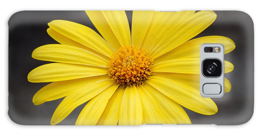 Simply Galaxy S8 Case featuring the photograph Simply Yellow by Charles Feagans