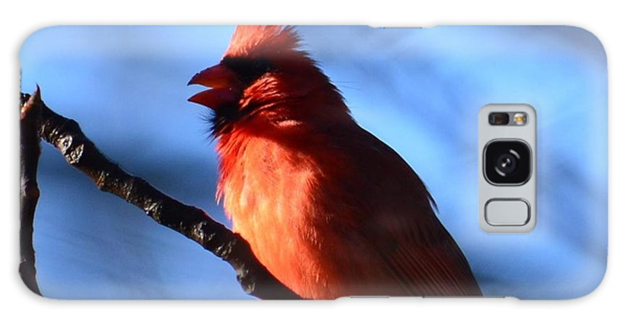 Singing Cardinal Galaxy S8 Case featuring the photograph Singing Cardinal by Maria Urso