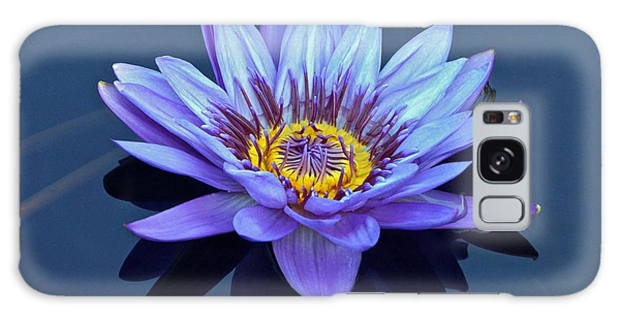 Nymphaea Galaxy S8 Case featuring the photograph Single Lavender Water Lily by Byron Varvarigos