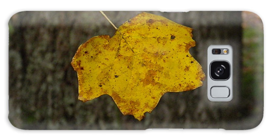 Leaf Galaxy S8 Case featuring the photograph Single Poplar Leaf by Nick Kirby