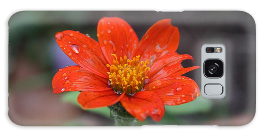 Single Red Flower Galaxy S8 Case featuring the photograph Single Red Flower For A Cure by James Lopez
