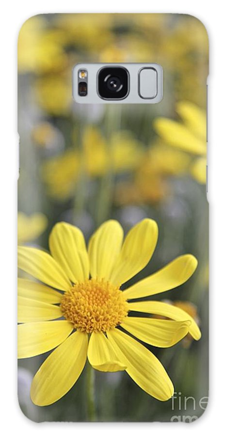 Yellow Daisy Galaxy S8 Case featuring the photograph Single Yellow Daisy by Sean Rathbun