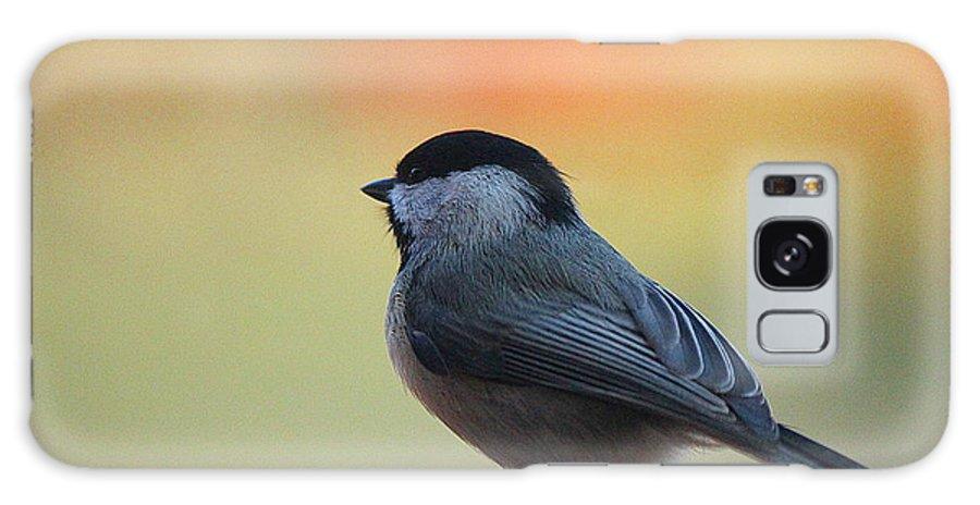 Bird Galaxy S8 Case featuring the photograph Sitting Pretty by Ariel Underwood
