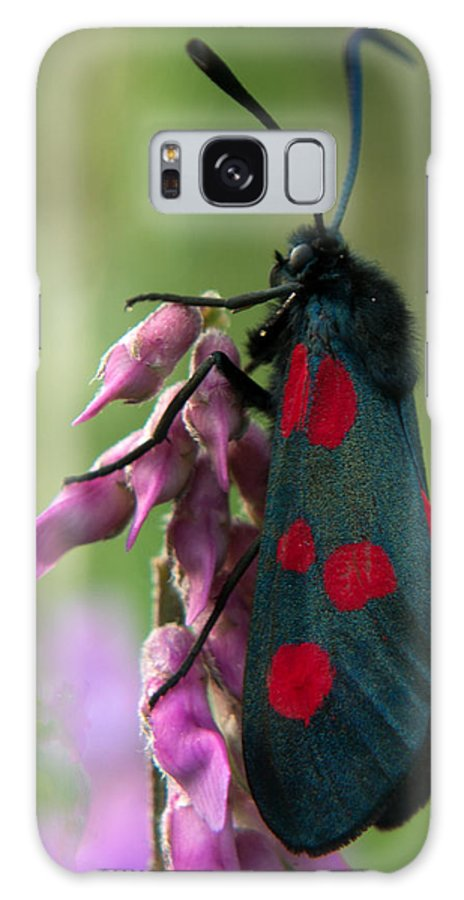 Moth Galaxy S8 Case featuring the photograph Six Spotted Burnett Moth by Peter Elliott