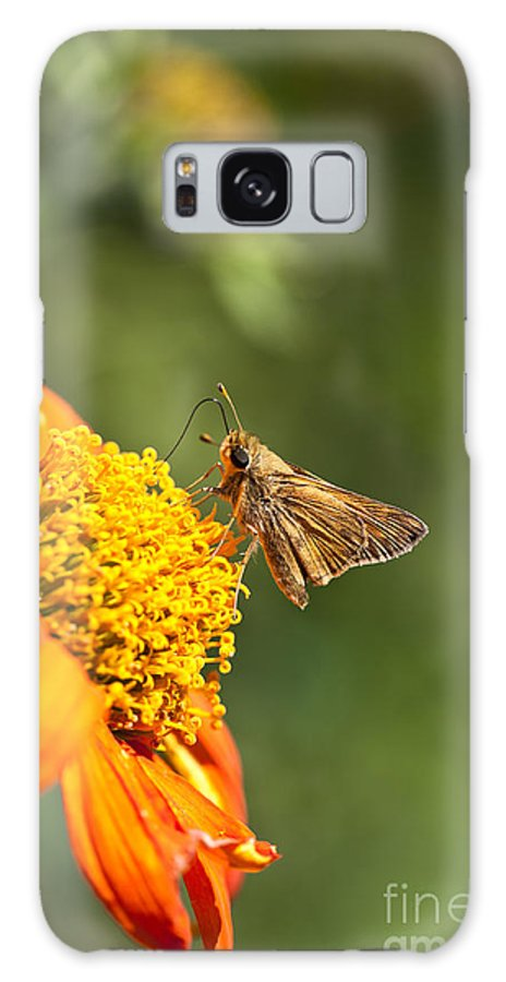 Butterfly Galaxy S8 Case featuring the photograph Skipper Butterfly On An Orange Flower by Brandon Alms