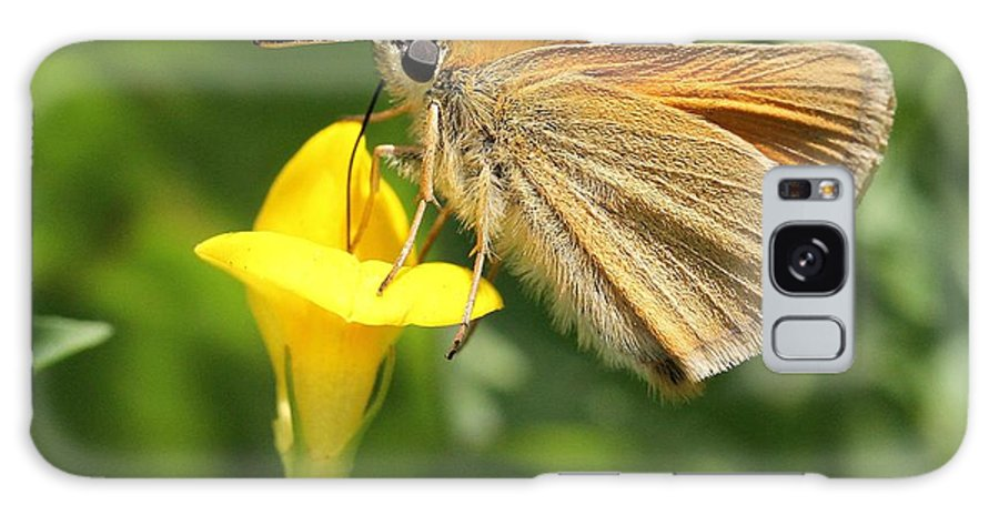 European Skipper Galaxy S8 Case featuring the photograph European Skipper On Bird's-foot Trefoil by Doris Potter
