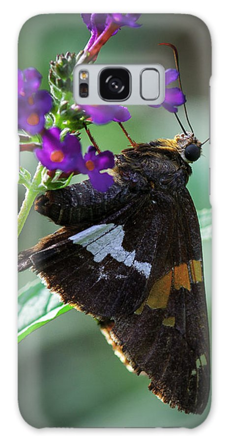 Butterflies Galaxy S8 Case featuring the photograph Skipper Z by Donald Brown