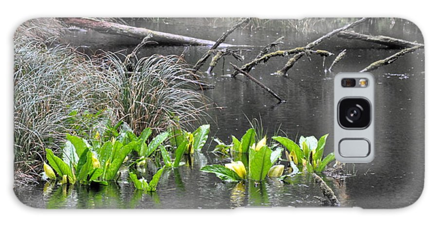 Skunk Cabbage Galaxy S8 Case featuring the photograph Skunk Cabbage Blooming In Washington State Forest 4 by Tanya Searcy