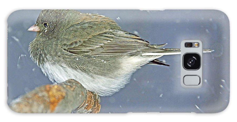 Snowbird Galaxy S8 Case featuring the photograph Slate Colored Junco Female by A Gurmankin