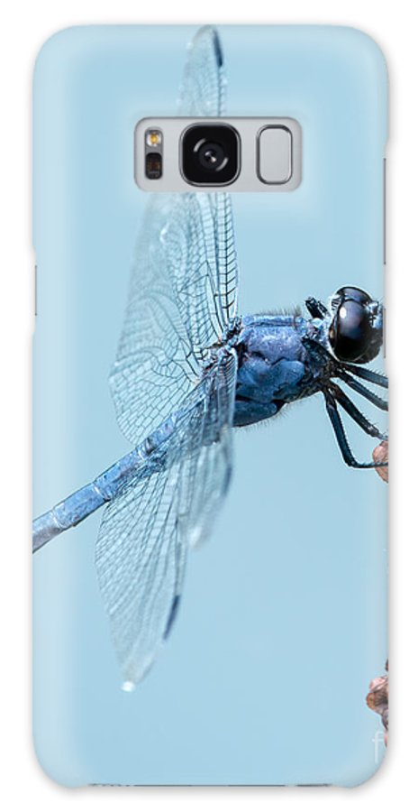 Animal Galaxy S8 Case featuring the photograph Slaty Skimmer by Abeselom Zerit
