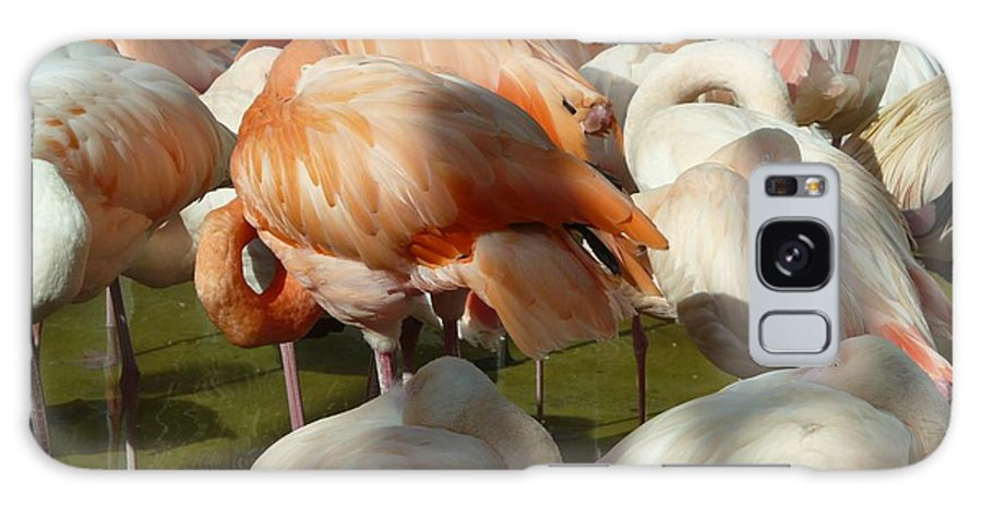Bird Galaxy S8 Case featuring the photograph Sleeping Beauties by Valerie Ornstein