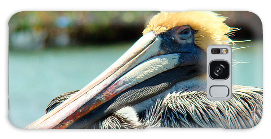 Pelican Galaxy S8 Case featuring the photograph Sleepy Pelican by Nancy L Marshall