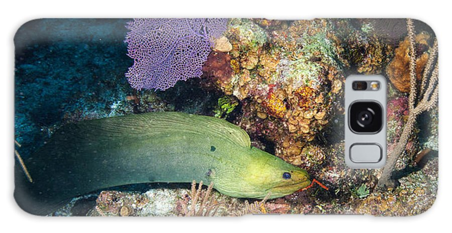 Belize Galaxy S8 Case featuring the photograph Slithering Moray by Jean Noren