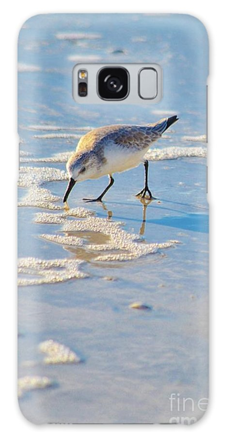 Shore Birds Galaxy S8 Case featuring the photograph Small Sandpiper Looking For Dinner by Carol McGunagle