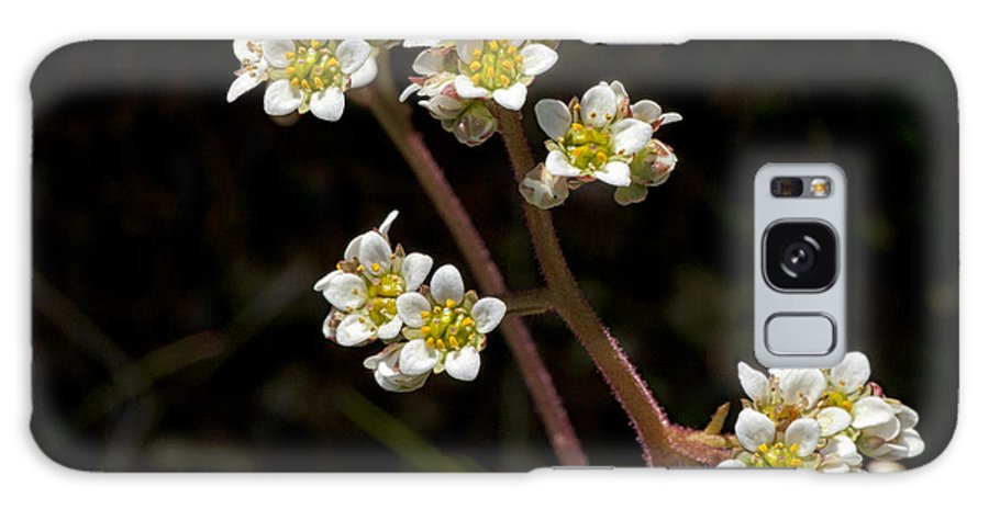 Small Galaxy S8 Case featuring the photograph Small White Flowers by Betty Depee