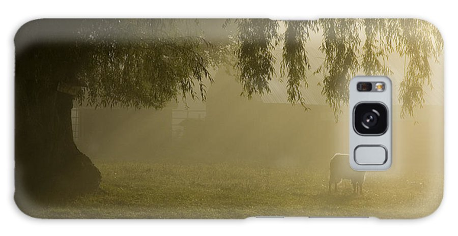 Goat Galaxy S8 Case featuring the photograph Smelly Goat In The Mist by Jerry McElroy
