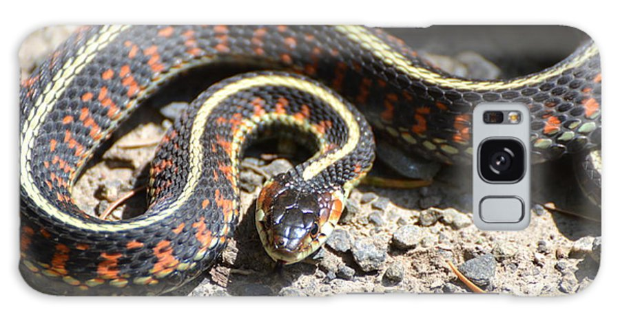 Snake Galaxy S8 Case featuring the photograph Snake by Robin White