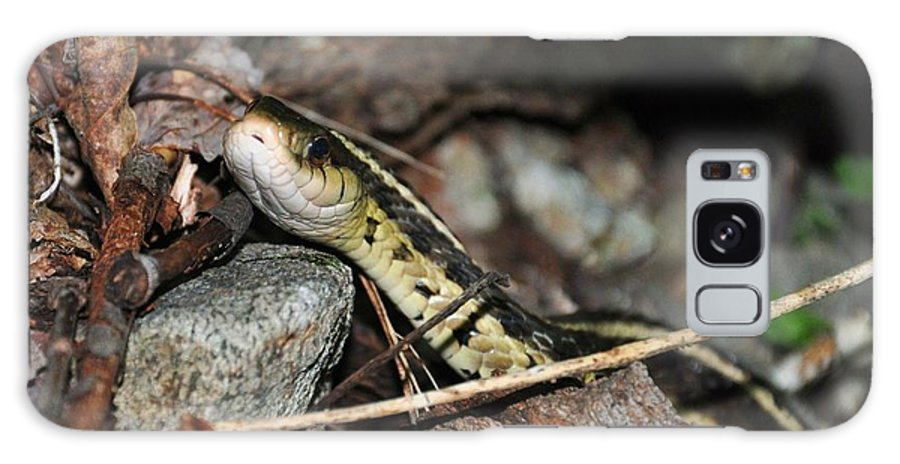 Snake Galaxy S8 Case featuring the photograph Sneaky Snake by Sherri Quick