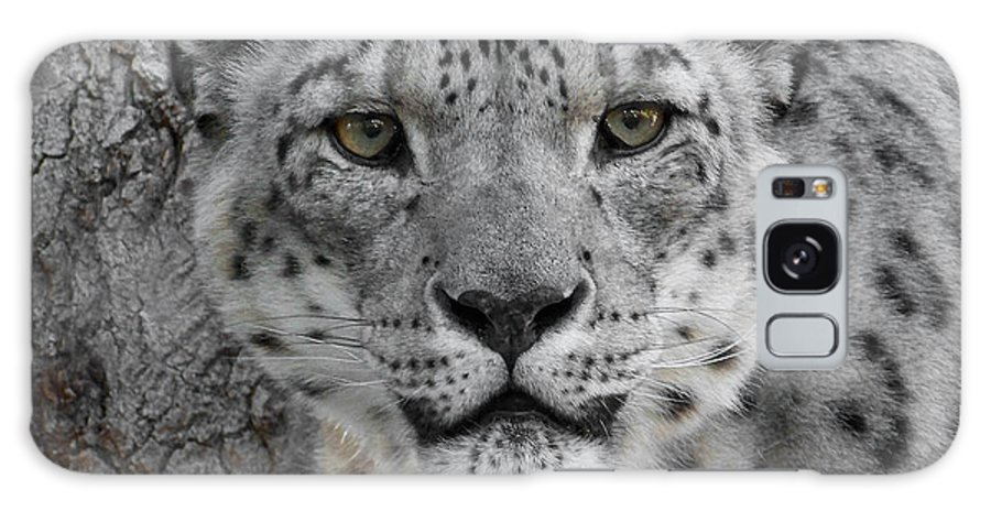 Animals Galaxy S8 Case featuring the photograph Snow Leopard 5 by Ernie Echols