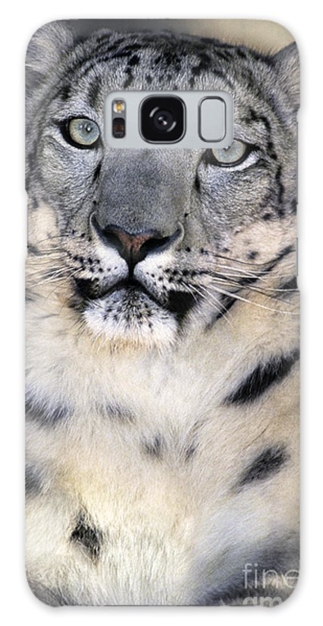 Snow Leopard Galaxy S8 Case featuring the photograph Snow Leopard Portrait Endangered Species Wildlife Rescue by Dave Welling