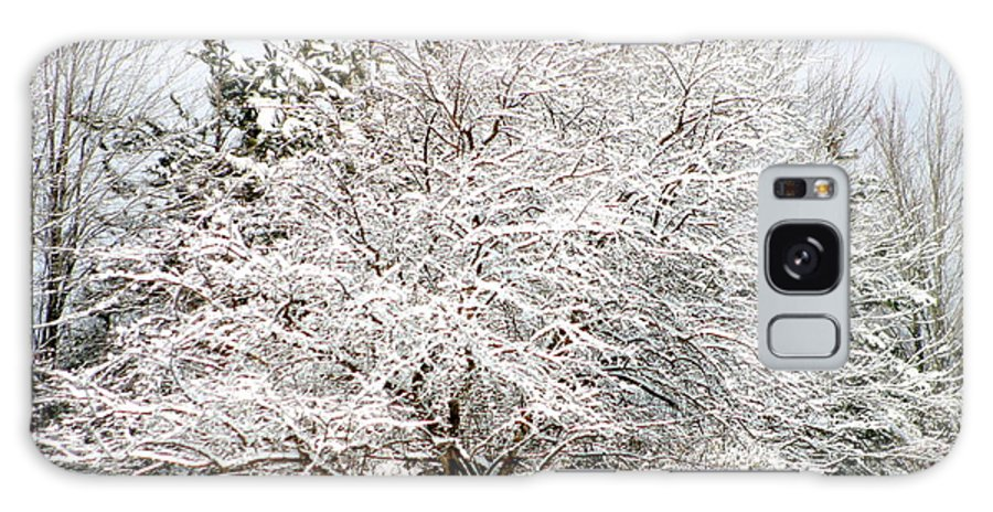 Snow Galaxy S8 Case featuring the photograph Snow Maple by Ann Butler