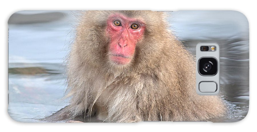 Snow Monkey Galaxy S8 Case featuring the photograph Snow Monkey In The Onsen by Natural Focal Point Photography