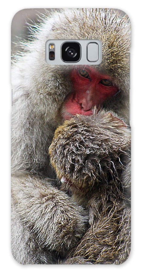 Japanese Macaque Galaxy S8 Case featuring the photograph Snow Monkeys by Catherine Snowden