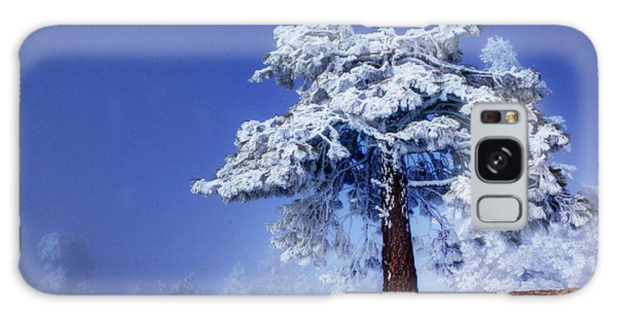 Tree Galaxy S8 Case featuring the photograph Snow Pine by Kabir Ghafari