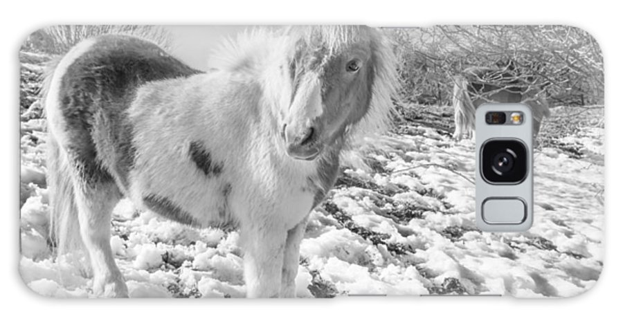 Christinesmart Galaxy S8 Case featuring the photograph Snow Ponies by Christine Smart