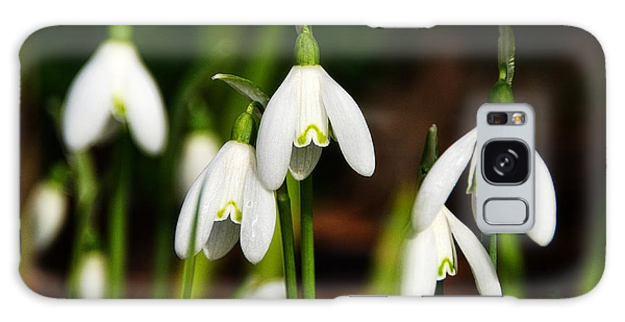 Snowdrops Galaxy S8 Case featuring the photograph Snowdrops by Susie Peek