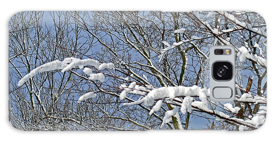 Winter Galaxy S8 Case featuring the photograph Snowy Branches With Blue Sky by Karen Adams