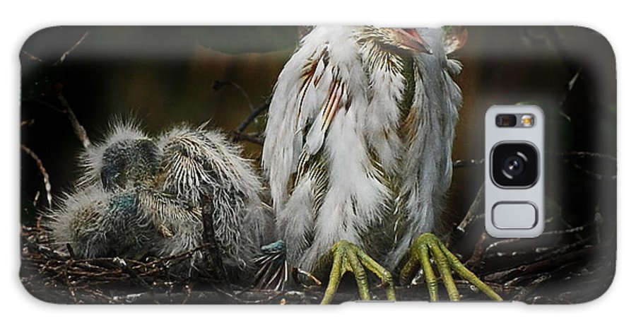 Bird Galaxy S8 Case featuring the photograph Snowy Egret Chick by Jim Rettker