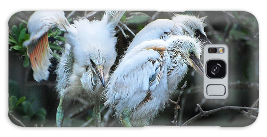Birds Galaxy S8 Case featuring the photograph Snowy Egret Chicks by Jim Rettker