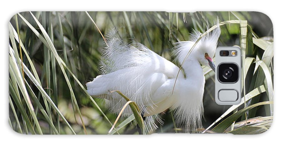 Bird Galaxy S8 Case featuring the photograph Snowy Egret by MaryAnn Barry