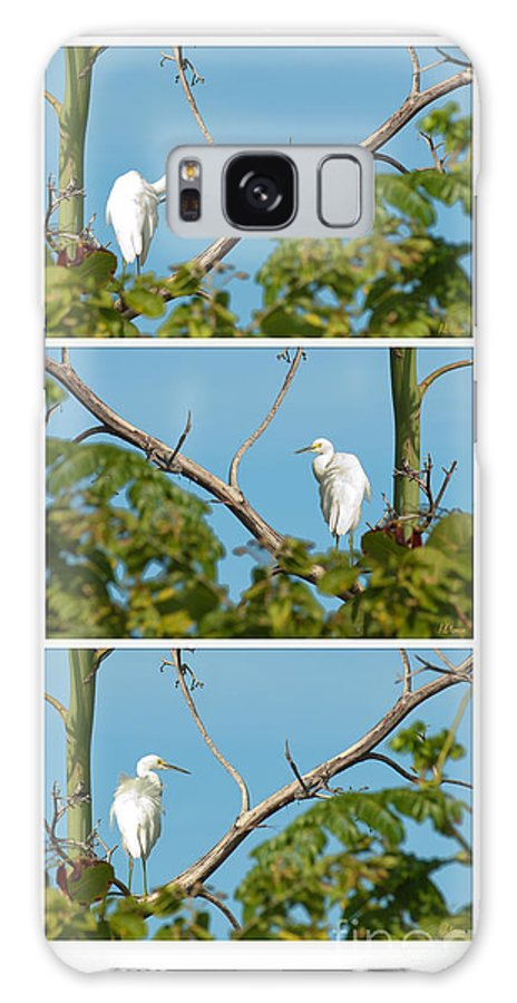 Egret Galaxy S8 Case featuring the photograph Snowy Egret Triptych by Anne Kitzman